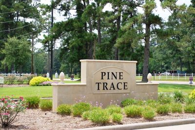 Pine Trace