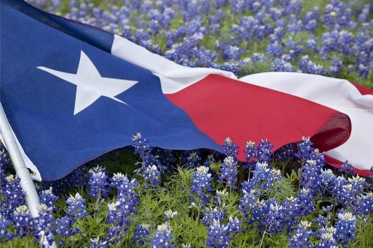 Texas Flag and Bluebonnets