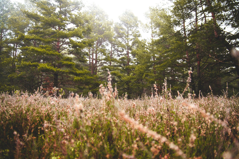 'Meadow Pines' by C.A. Jones, Inc. in St. Louis