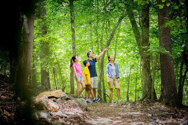 Forest Ridge Trail