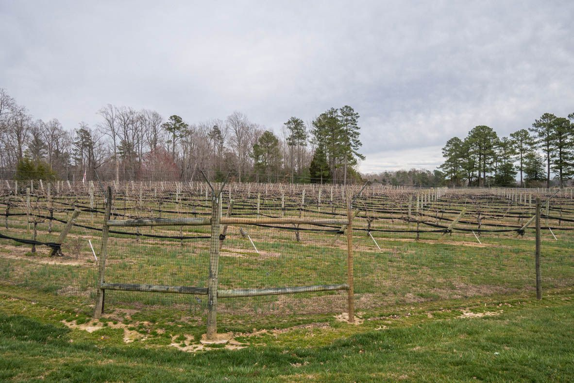 'Arbors at Farms of New Kent' by D.R. Horton - Southern Virginia in Richmond-Petersburg