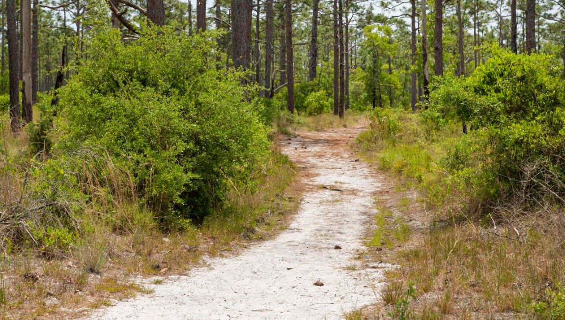 'Salt Creek' by D.R. Horton - Wilmington, NC in Jacksonville