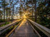 The Trails at Hammock Bay by DSLD Homes - Louisiana in Sarasota-Bradenton Florida