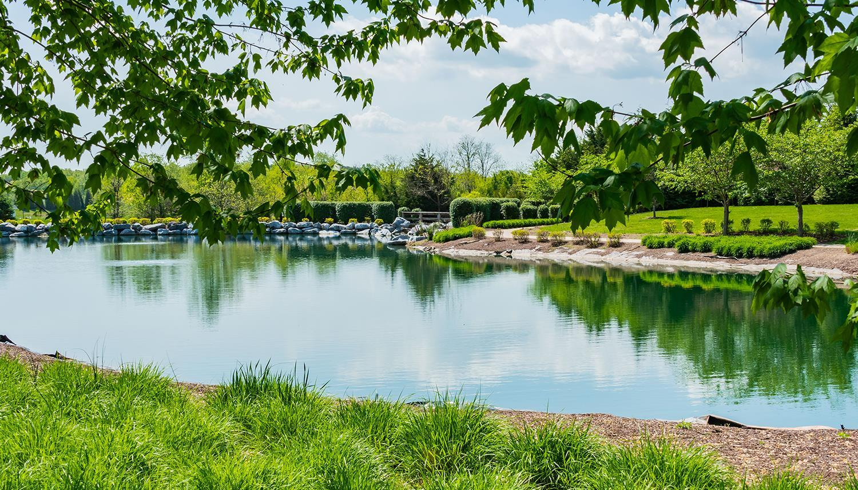 'Cedar Meadows' by Dan Ryan - Washington Region in Washington