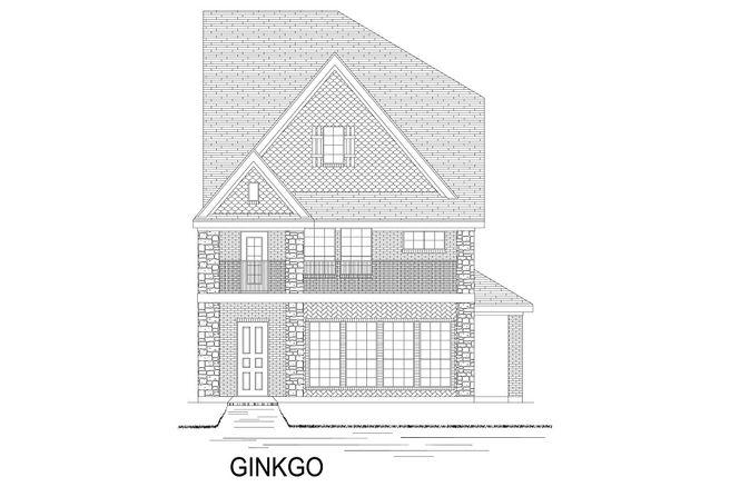 Ginkgo - TH