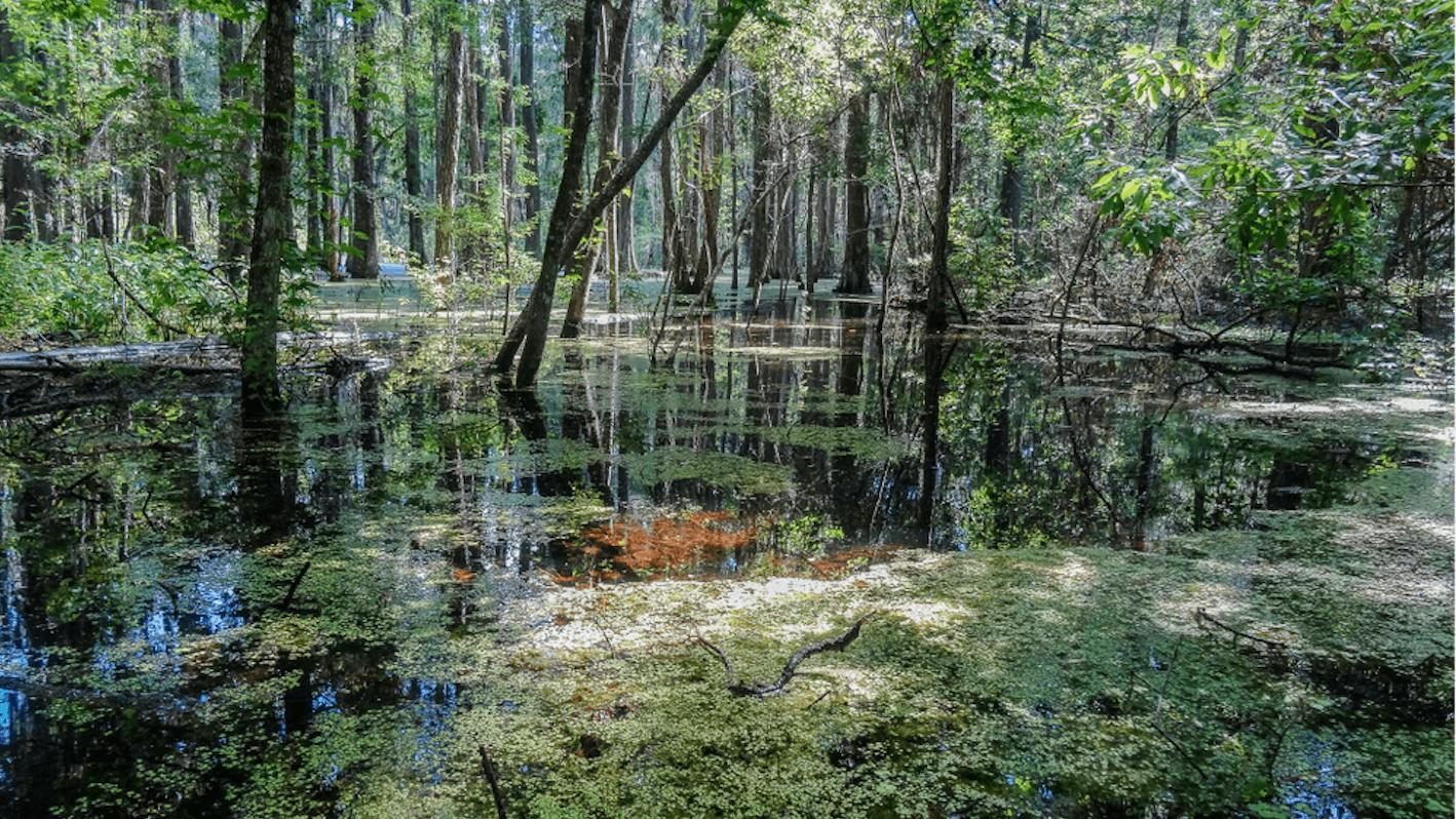 'Village Park' by MARONDA - JACKSONVILLE SOUTH in Jacksonville-St. Augustine