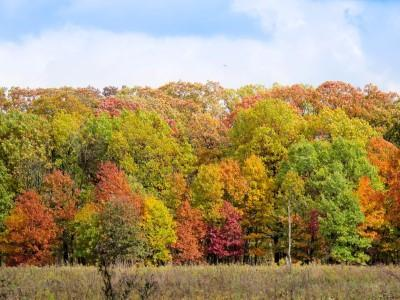 Tree Line In Fall (Custom)