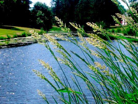 Noble's Pond :Noble's Pond