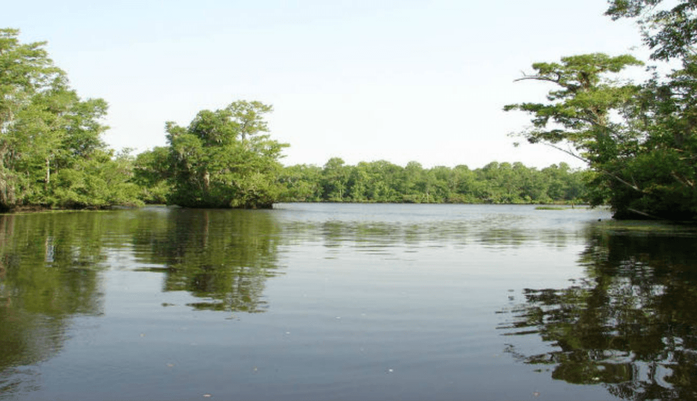 Relax on the Cape Fear River