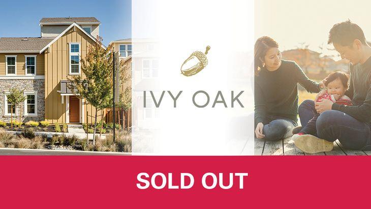 Ivy Oak,94568