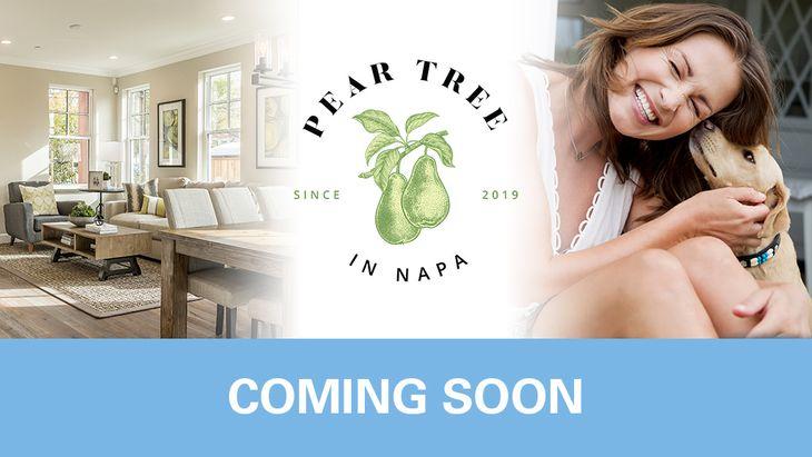 Pear Tree in Napa,94558