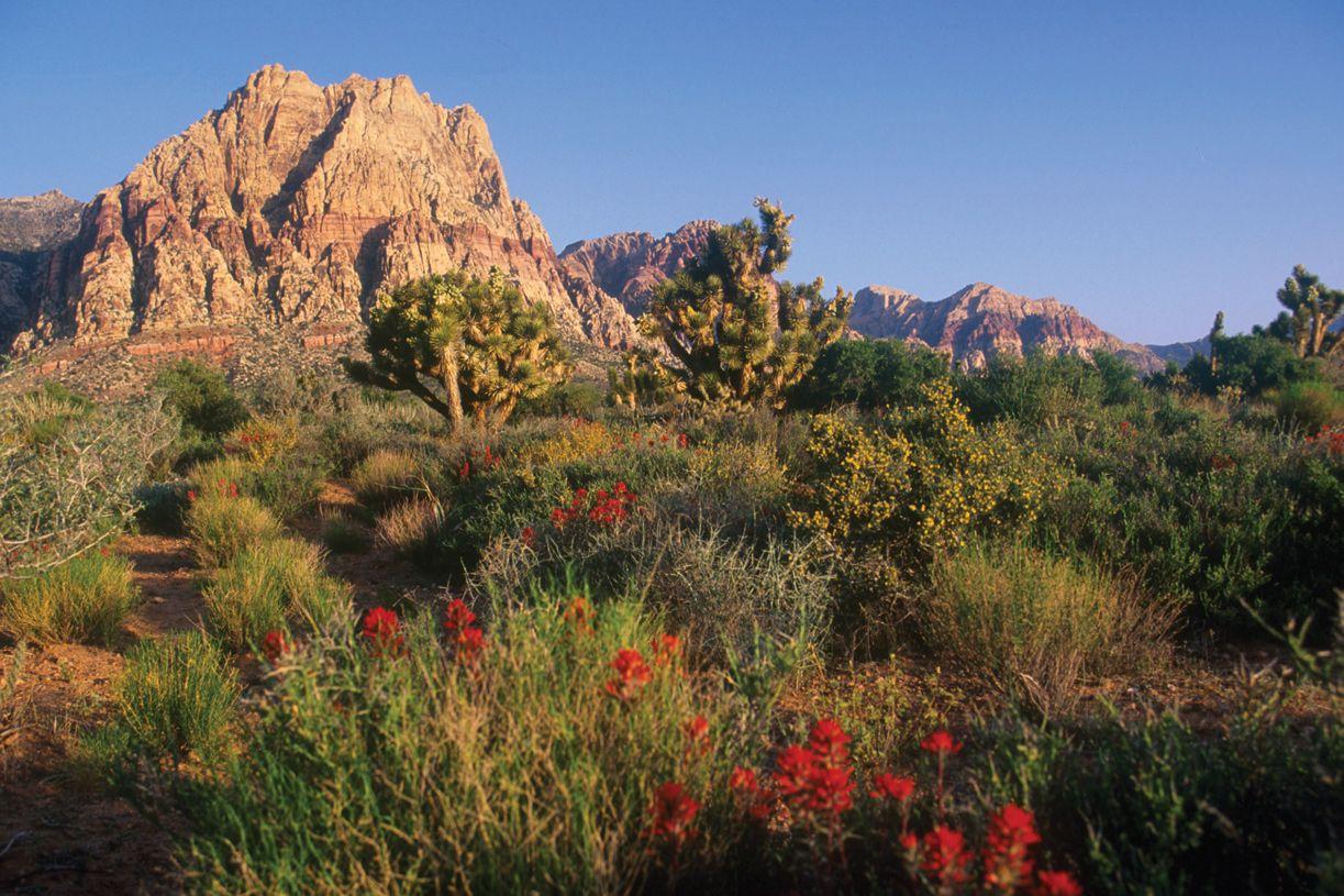 'Acadia Ridge' by Toll Brothers-NV - LAS VEGAS in Las Vegas