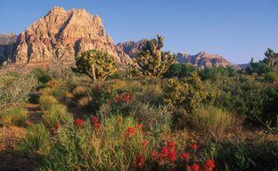 Acadia Ridge by Toll Brothers in Las Vegas Nevada