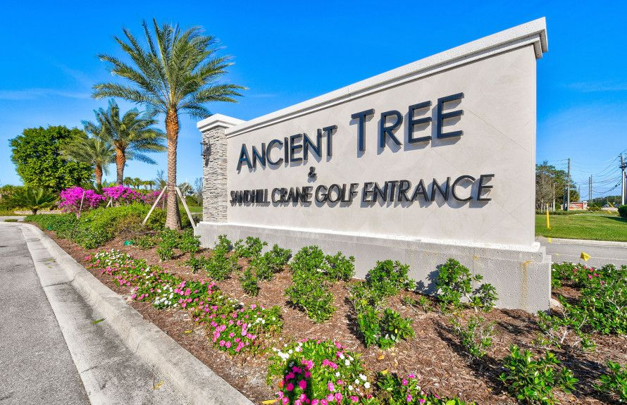'Ancient Tree' by DiVosta - Florida - Palm Beach in Palm Beach County