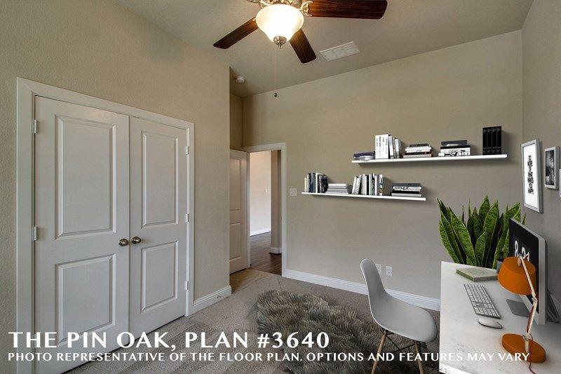 Interior:The Pin Oak - Study