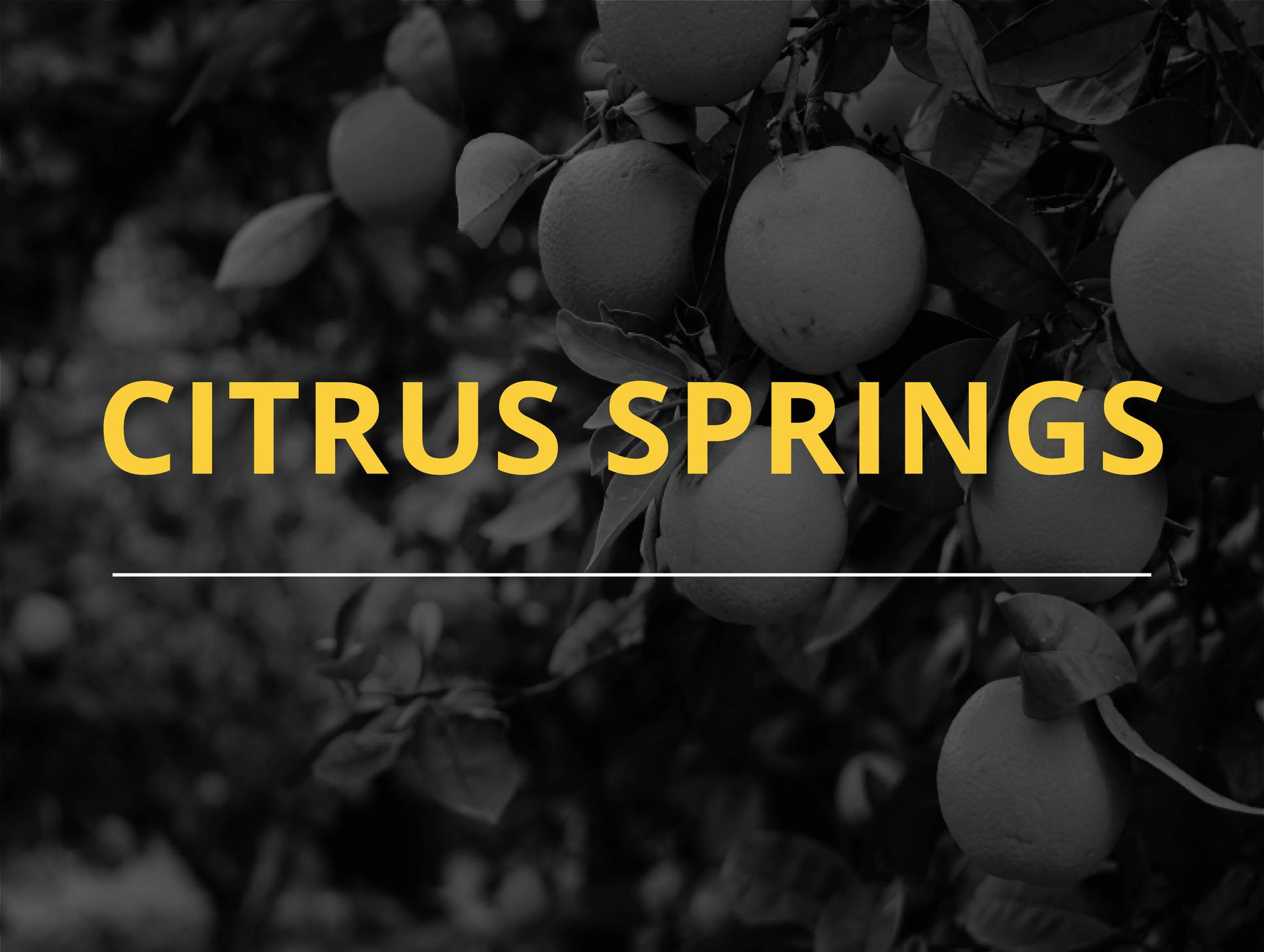 Citrus Springs,34434
