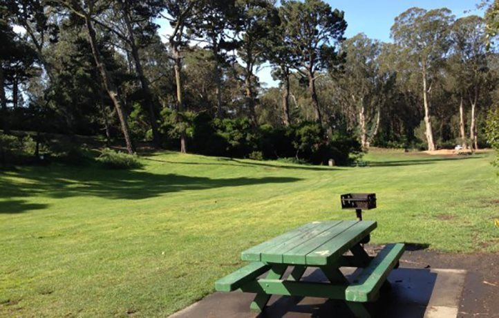 Picnic and Greenspace