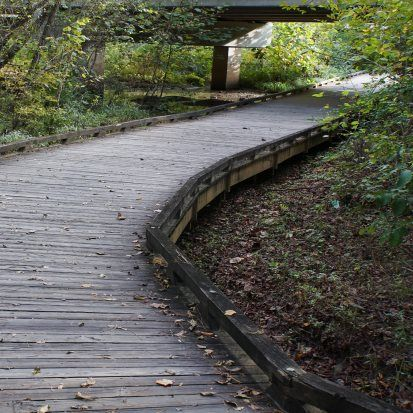 Suwanee Creek Greenway passes through forests and wetlands filled with birds such as blue herons and