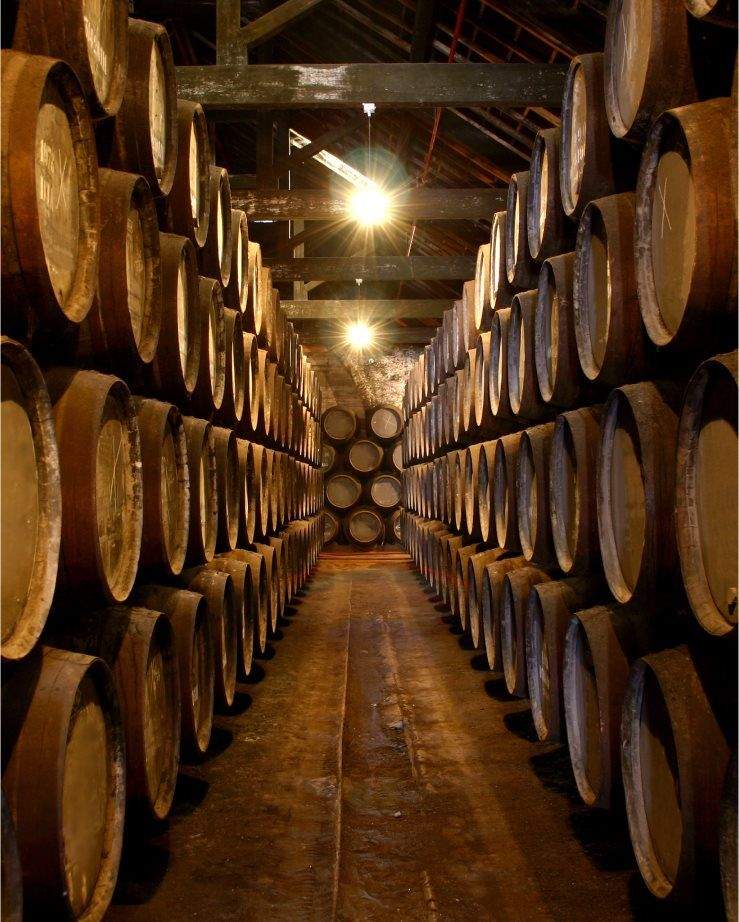 Barrel Room in a Winery