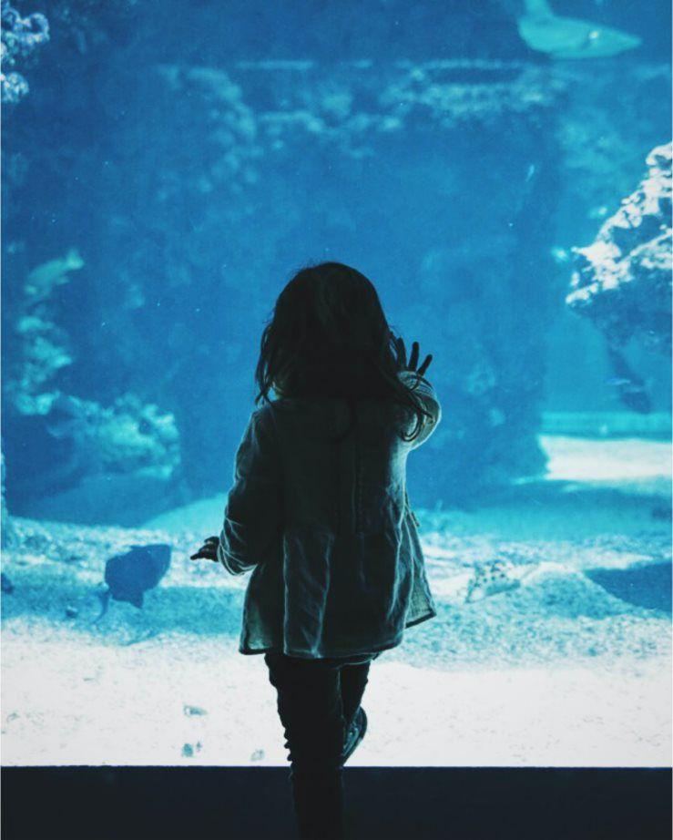 A child looking into an aquarium