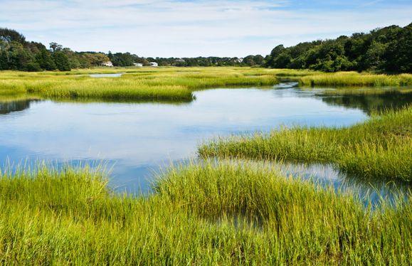 Marshside Views