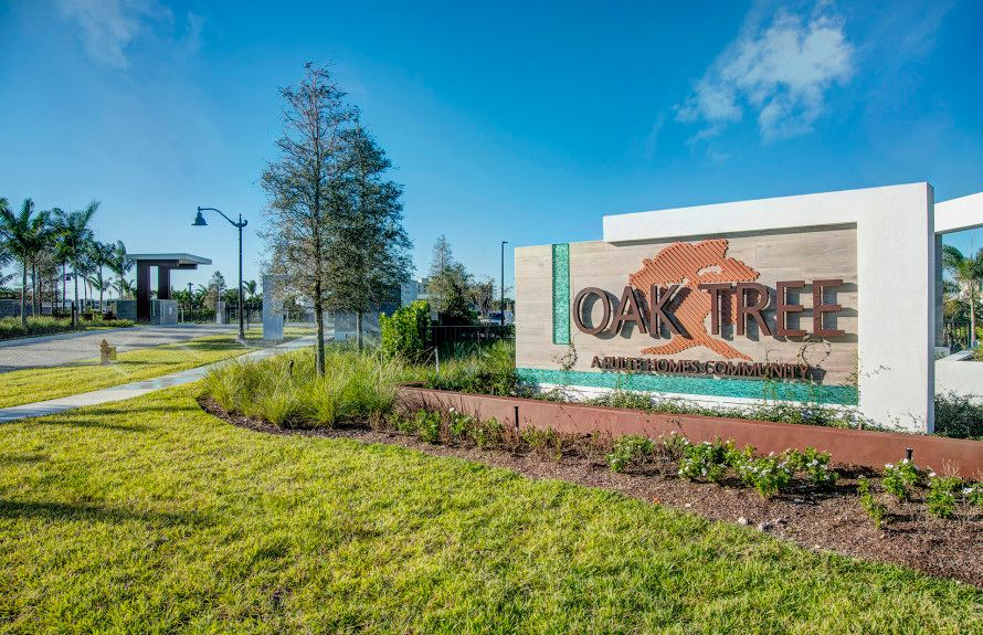 Oak Tree in Oakland Park