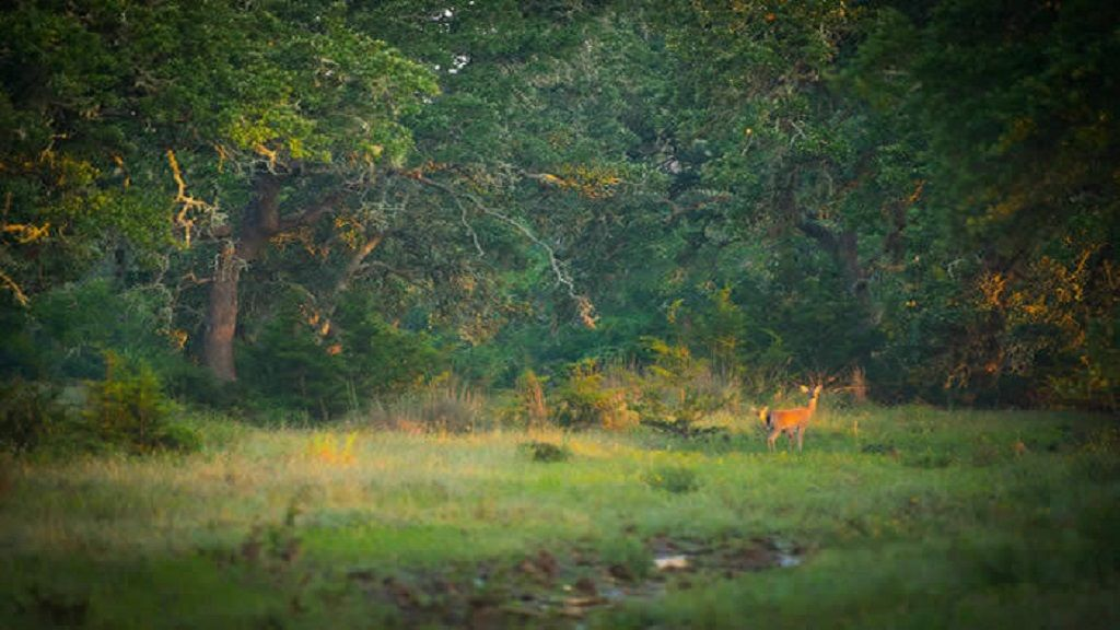 arrowhead_ranch_homes_deer