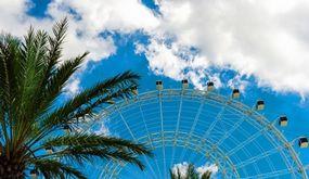 Picture of Orlando